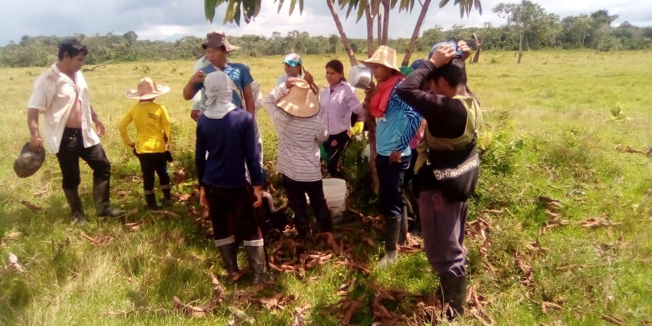 Bosques de alimentos, restauración y seguridad alimentaria para las comunidades indígenas de la Amazonía