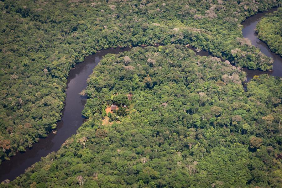 Cinco razones para no quemar el bosque